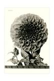 Large, Elaborate Flower Head Posters