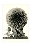 Large, Elaborate Flower Head Posters