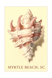 Conch Shell, Myrtle Beach Print