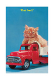 Next Load Kitten in Toy Truck Prints