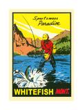 Sportsman Paradise, Whitefish Poster