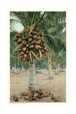Coconut Palm Prints