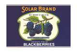 Solar Blackberry Label Posters