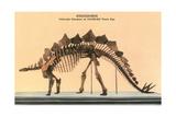 Stegosaurus Skeleton Posters