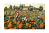 Pumpkin Field Art