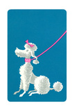 Poodle with Pink Leash Prints