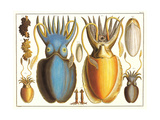 Exotic Squid Plakater