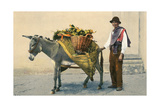Donkey Carrying Produce Poster