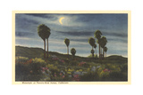 Moonlight at Twenty-Nine Palms Prints