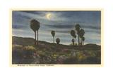 Moonlight at Twenty-Nine Palms Posters