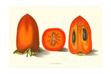 Persimmon Posters
