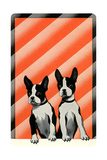 Boston Terrier Pups Posters