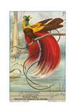Oiseau de paradis Posters