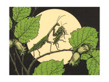 Praying Mantis with Grasshopper Prints