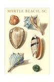 Seashells, Myrtle Beach Prints