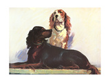 Spaniels Posters