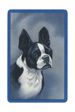 Boston Terrier Prints