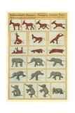 Vintage Circus Animal Toys Print