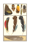 Various Feathers Posters