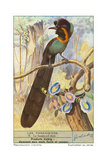 Bird of Paradise Posters