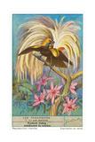 Oiseau de paradis Affiches