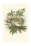 Catbird Nest and Eggs Prints