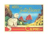 Hotel Gatto Bianco Prints