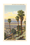 Wild Palms, Palm Springs Posters