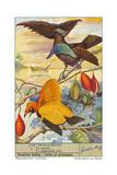 Oiseaux de paradis Affiches