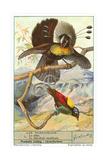 Oiseaux de paradis Poster
