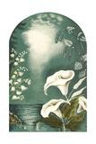 Calla Lilies, Snowbells Prints