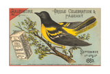 Baltimore Oriole Pageant Prints