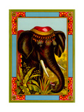 Indian Elephant with Beanie Prints