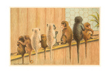 Eight Monkeys, Yum Prints