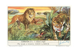Lions and Tiger Posters
