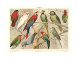 The Parrot Family Posters