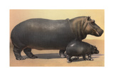 Mother and Baby Hippo Poster