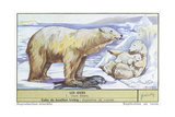 Polar Bears Prints