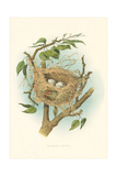Orchard Oriole Nest and Eggs Prints