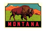 Montana Decal Art