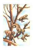 Monkeys in Trees Posters
