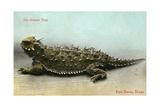 Horned Toad, Fort Davis Kunstdruck