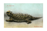 Horned Toad, Fort Davis Poster