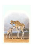 Mother and Baby Giraffe Prints