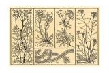 Floral Motifs Print