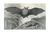 Bats Prints