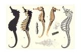 Seahorses Prints