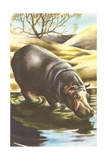 Hippo at Shore Poster