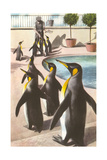 Penguins at the Zoo Posters