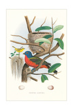 Painted Bunting Nest and Eggs Prints